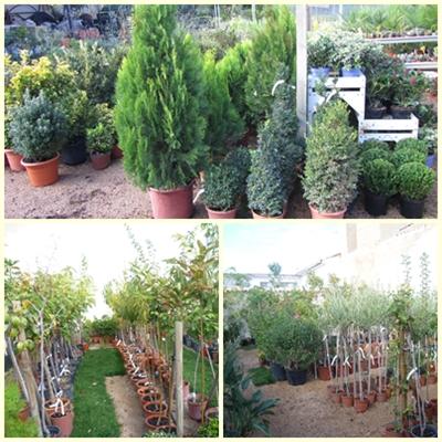 Plantas y semillas azalea jardiner a for Plantas fuertes para exterior