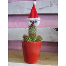 Cactus Navidad
